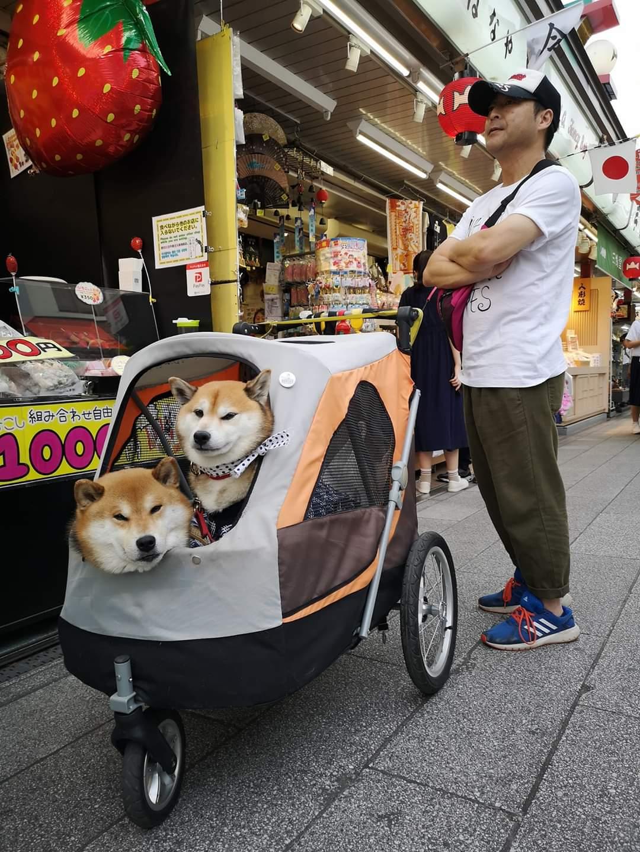Akita dog , Japan